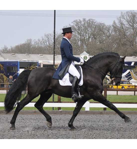 Andrew Gould Dressage