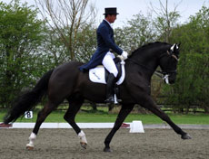 Andrew Gould riding Bellissimo